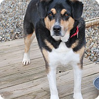 Adopt A Pet :: Bailey - Berea, OH