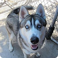 Adopt A Pet :: Sire - Belleville, MI