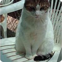 Adopt A Pet :: Minnie Pearl - El Cajon, CA