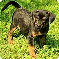 Adopt A Pet :: Tabitha - Staunton, VA