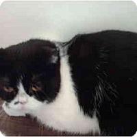 Adopt A Pet :: Kiki - El Cajon, CA