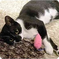 Adopt A Pet :: HoHo - Irvine, CA