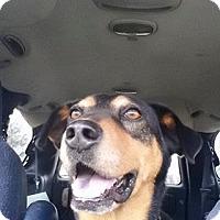 Adopt A Pet :: Forrest - Midlothian, VA