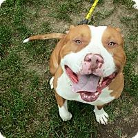 Adopt A Pet :: Titus - Sacramento, CA