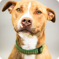 Adopt A Pet :: Stetson - Lake Odessa, MI