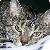 Adopt A Pet :: Peck - Chenango Forks, NY