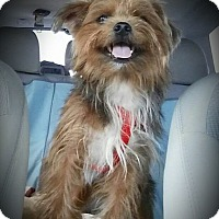 Adopt A Pet :: Chase ~ Adoption Pending - Youngstown, OH