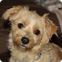 Adopt A Pet :: Ozzy - Edmonton, AB