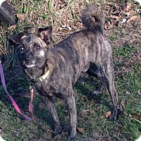 Terrier (Unknown Type, Medium) Mix Dog for adoption in Texico, Illinois - Timmy