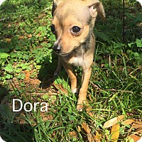 Adopt A Pet :: Dora - Gainesville, FL
