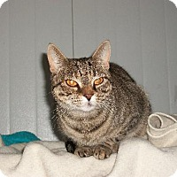 Adopt A Pet :: Karleigh - Watsontown, PA