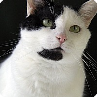 Adopt A Pet :: Marshall - Portland, OR