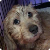 Adopt A Pet :: BLAKELY - Lubbock, TX