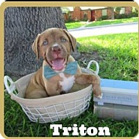 Adopt A Pet :: Triton - Leming, TX