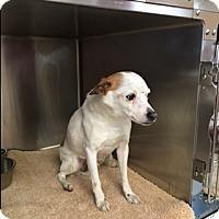 Adopt A Pet :: Jaq - Umatilla, FL