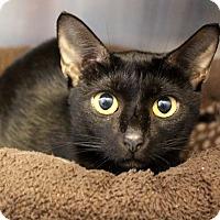 Adopt A Pet :: Bella - Sarasota, FL