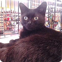Adopt A Pet :: Coco - Richmond, VA