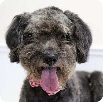 Belgian Shepherd Mix Dog for adoption in Picayune, Mississippi - Marley