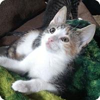 Adopt A Pet :: Alexa - Cedar Rapids, IA