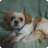Adopt A Pet :: Mitsy - E. Wentachee, WA