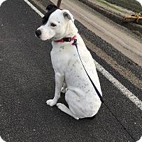 Adopt A Pet :: Lulu - Tracy, CA