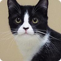 Adopt A Pet :: Gem - Grants Pass, OR