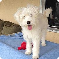 Adopt A Pet :: Nala - Encinitas, CA