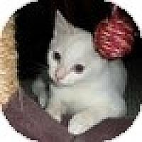 Adopt A Pet :: Cappuccino - Vancouver, BC