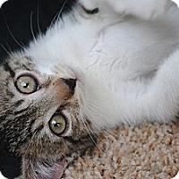 Adopt A Pet :: Pixie - Palmdale, CA