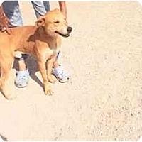 Adopt A Pet :: Papucho(URGENT) - Miami Beach, FL
