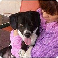 Adopt A Pet :: Wilson - Scottsdale, AZ