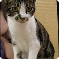 Adopt A Pet :: Hyla - Irvine, CA