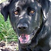 Adopt A Pet :: Brutus - Lewisville, IN