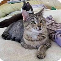 Adopt A Pet :: Crystal - Palmdale, CA
