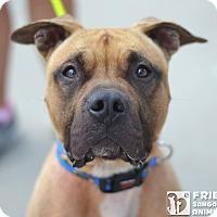 Adopt A Pet :: Ryder - Springfield, IL