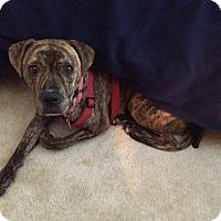 Adopt A Pet :: Ellie-Courtesy Post - Alpharetta, GA