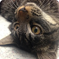Adopt A Pet :: George - Newport Beach, CA