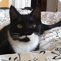 Adopt A Pet :: Marianne - Brooklyn, NY