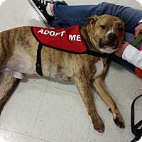 Adopt A Pet :: Rocky - Virginia Beach, VA