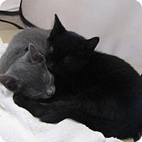 Adopt A Pet :: Luna - bloomfield, NJ
