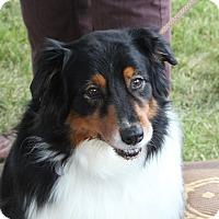 Adopt A Pet :: Dia - Elk River, MN