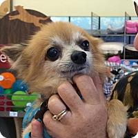 Adopt A Pet :: Biggie - Miami, FL