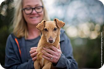 Dachshund Mix Dog for adoption in Vista, California - Tee Bone