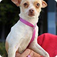 Adopt A Pet :: Arrowette - San Diego, CA