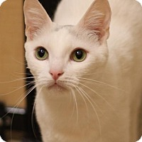 Adopt A Pet :: Abbazaba - Ventura, CA