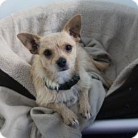Adopt A Pet :: Tyler - Rockwall, TX