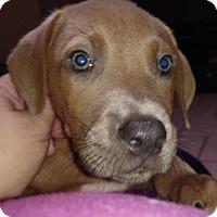 Adopt A Pet :: Eddie - Tampa, FL