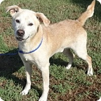 Adopt A Pet :: Rooster - Olive Branch, MS