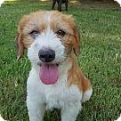 Adopt A Pet :: Denver