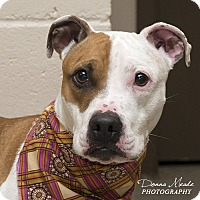Adopt A Pet :: Sophie - Troy, OH